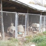 Horrific Conditions at Delaware County, OK Puppy Mill