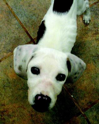 adandoned-puppy-in-hamlin