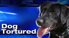 dog-tortured1