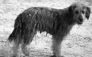a-stray-dog
