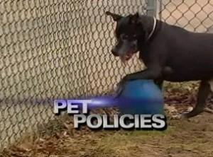 pet-policies