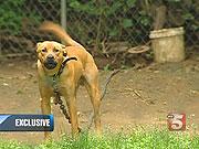 southside-bulldoggin
