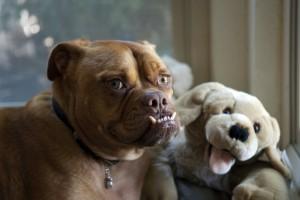 Pabst-Ugliest Dog