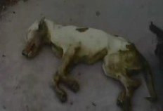 starved-dead-puppy