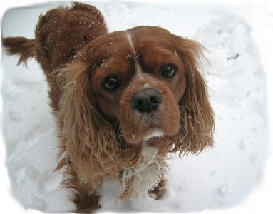 cold_dog