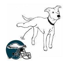Dog Pisses on Eagles Helmet