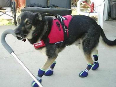 service_dog_air