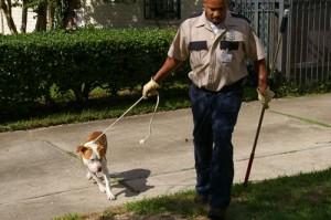 Pitbull Burglar 1