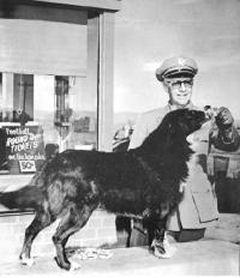 Shep in 1955