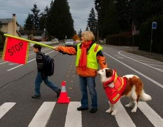 LuLu Crossing Guard