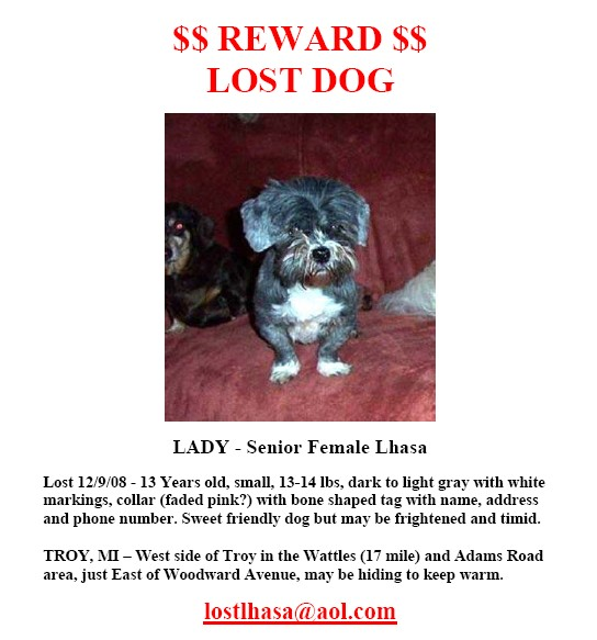 Lhasa_Lost_Dog