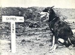 war_dog_Butch