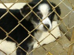 Harrison County Animal Shelter Theft