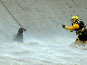 River Rescue of Dog