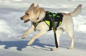 Quebec Dog Rescue Organizations