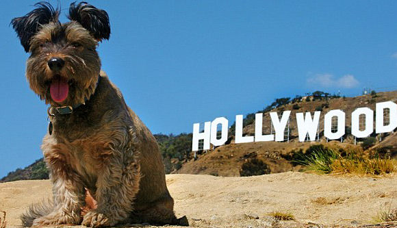 Hollywood Dog Park