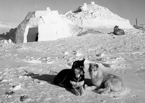 Inuit Indians Homes http://fortheloveofthedogblog.com/news-updates/the-inuit-sled-dog-killings
