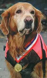 Greenwich Rescue Dogs