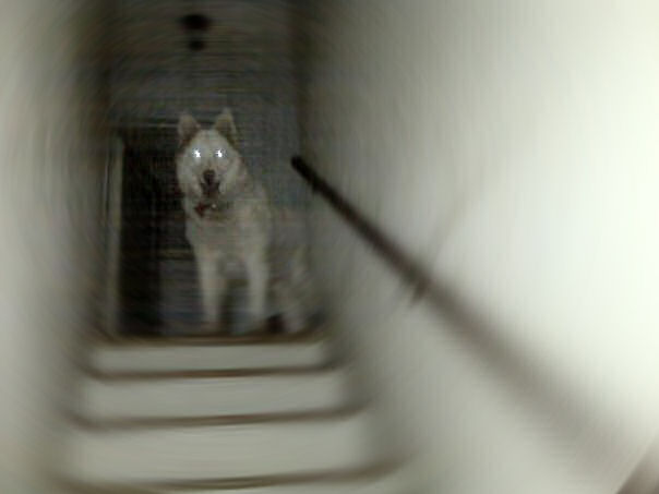 Legend Of The Ghost Dog Pictures