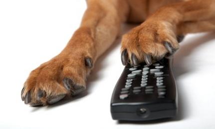 Dog remote