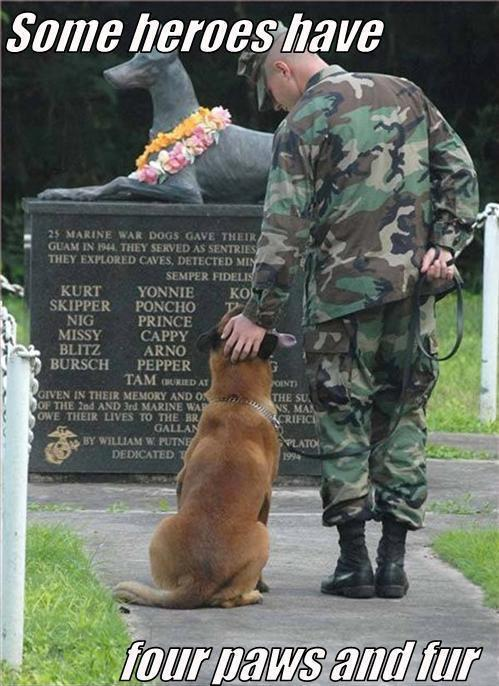 Some Heroes Have Four Paws and Fur