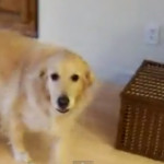 Need a Little Help at Home?  Check Out This Pooch! VIDEO