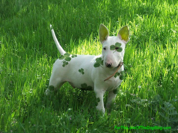 Image Result For Cute Real Puppy