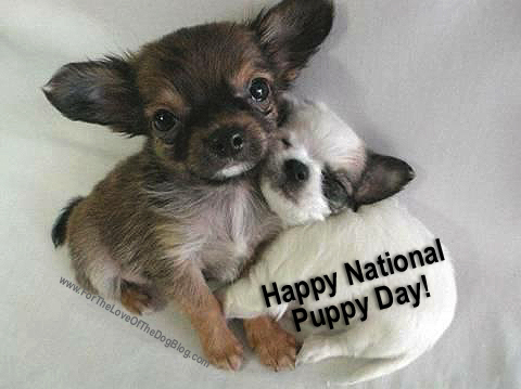 Image result for national puppy day