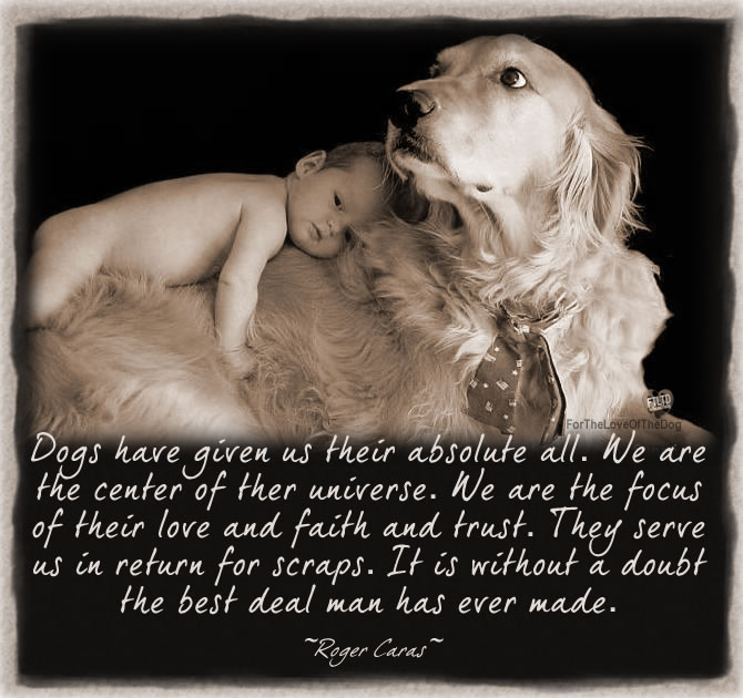 Dog Quote – Dogs Have Given Us Their Absolute All…