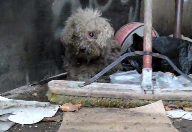Blind Dog Rescue Groups