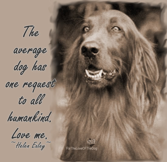 The Average Dog Has One Request....
