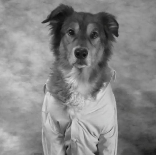 Image Result For Fetch Dog Training