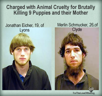 Amish dog killers