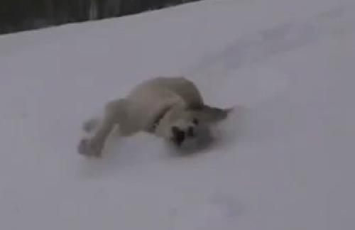 dog snow vid
