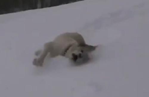 dog snow vid