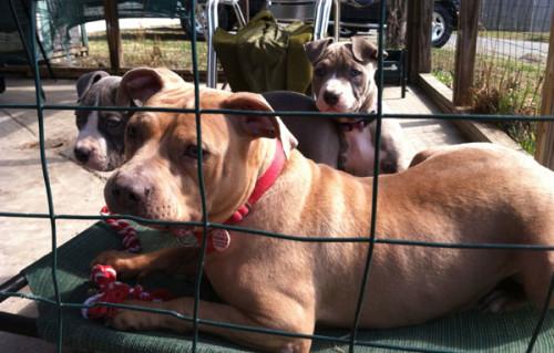 3 U-Haul Dogs