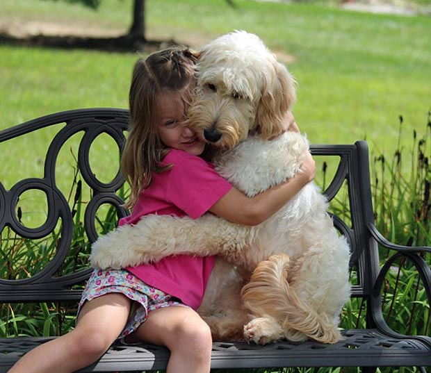 Best Service Dogs For Diabetics