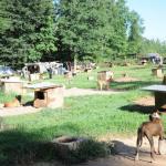 Dogfighting Raid