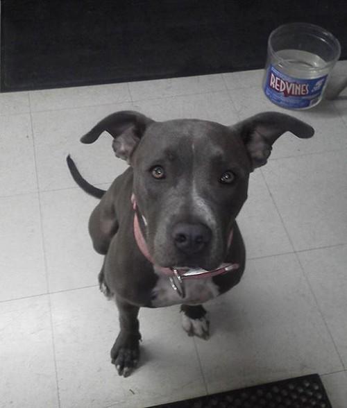 stolen dog lexi