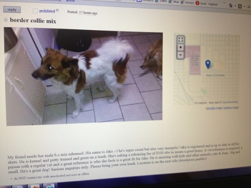 Woman Finds Her Missing Dog Being Sold on Craigslist ...